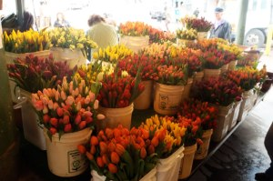 pike place market tulips
